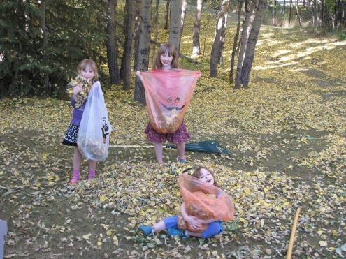 leaves for blog